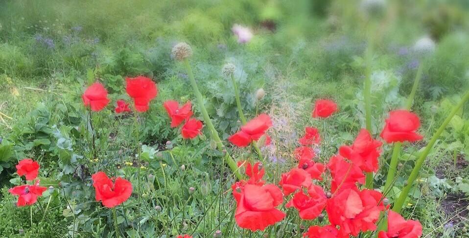 5 anledningar att välja ekologiskt